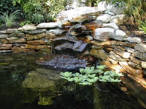 Nature bassin la mare et le bassin de jardin naturel afficher le sujet - Petit bassin de jardin avec cascade ...